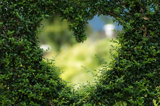 srdce v keři